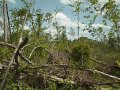 #2: Fallen trees, passing clouds