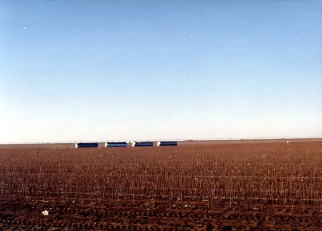 The cotton field containing 34N/102W.
