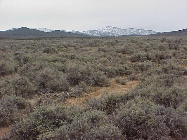 View to the north from the confluence site.