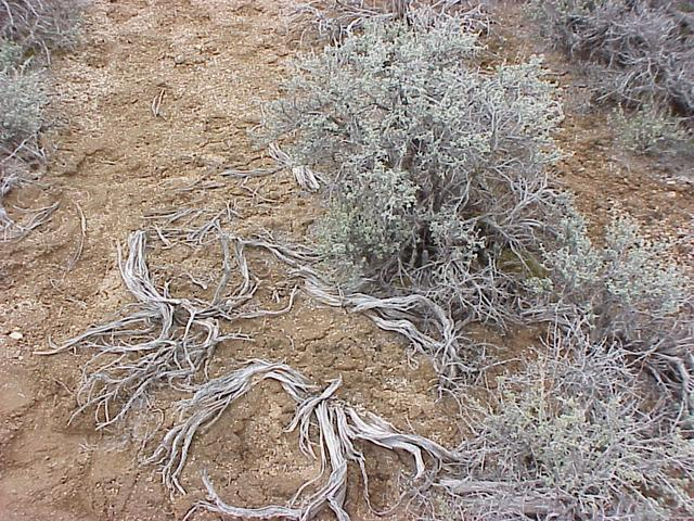 Ground cover at confluence site.