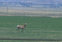 #8: Deer a few miles from the confluence