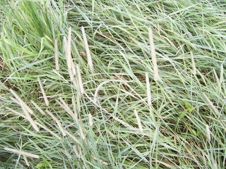 #1: grass at the confluence