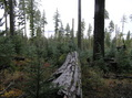 #6: Log view from the confluence to the west.