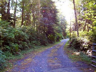 #1: View to the east up the driveway toward the confluence.