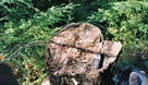 #6: Gps on confluence stump