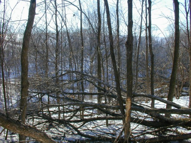 The view west shows the ravine as it meanders left to right toward the Wisconsin River