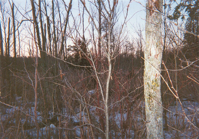 View looking south from the confluence, into heavier brush and grasses.
