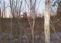 #3: View looking south from the confluence, into heavier brush and grasses.