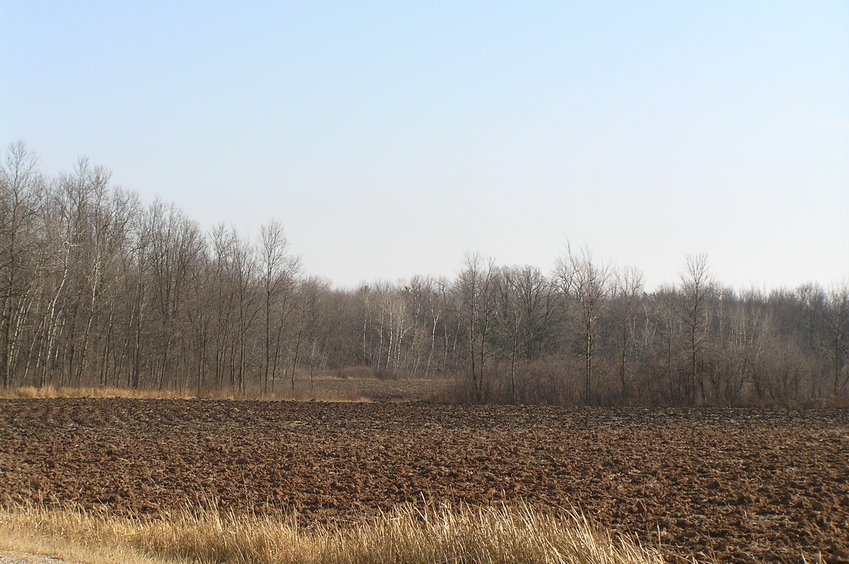 View from the north, looking toward the marsh to the southeast where the confluence lies.