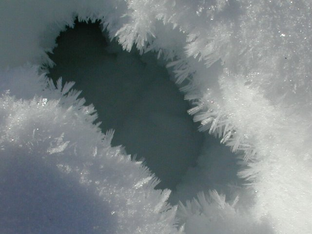 Feathery ice crystals grow inwards from the sides of a hole left by a passing deer.