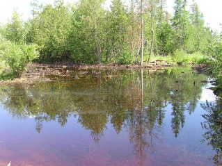#1: The confluence point lies on the left side of this bog.  Good luck reaching the precise point in summertime!