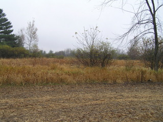 #1: Site of 45 North 91 West, looking southeast, with the confluence in the marsh in the mid-distance.