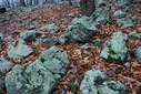 #6: Green rocks near the confluence point