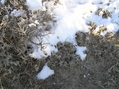 #7: Snow and sage:  Groundcover at the confluence site.
