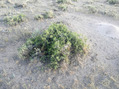 #6: Ground Cover showing typical bush at zeropoint