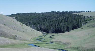 #1: looking south - the confluence is somewhere along the ridge top to the right of the pine trees; the stream is the North Fork of the Powder River just below its outlet from the Dullknife Reservoir