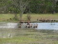 #5: Wild Ducks on the flooded roads near the CP