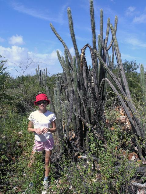 Cathinka was dwarfed by the cactus plants