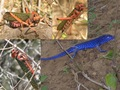 #10: Lizards and grasshoppers around the Confluence - Lagartijas y langostas cerca la confluéncia