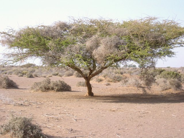 A single tree near the Confluence