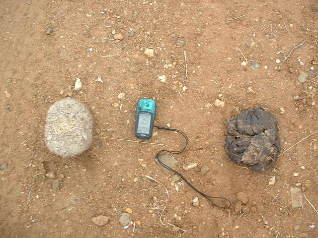 Evidence of the normal inhabitants of the area around the site. Left – elephant dung, right – buffalo pat.